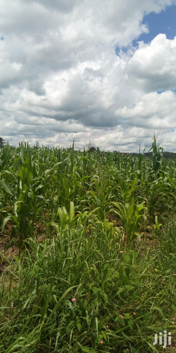 Archive: 150 Acres Agricultural Land In Zirobwe Kikyusa Kamira For Sale