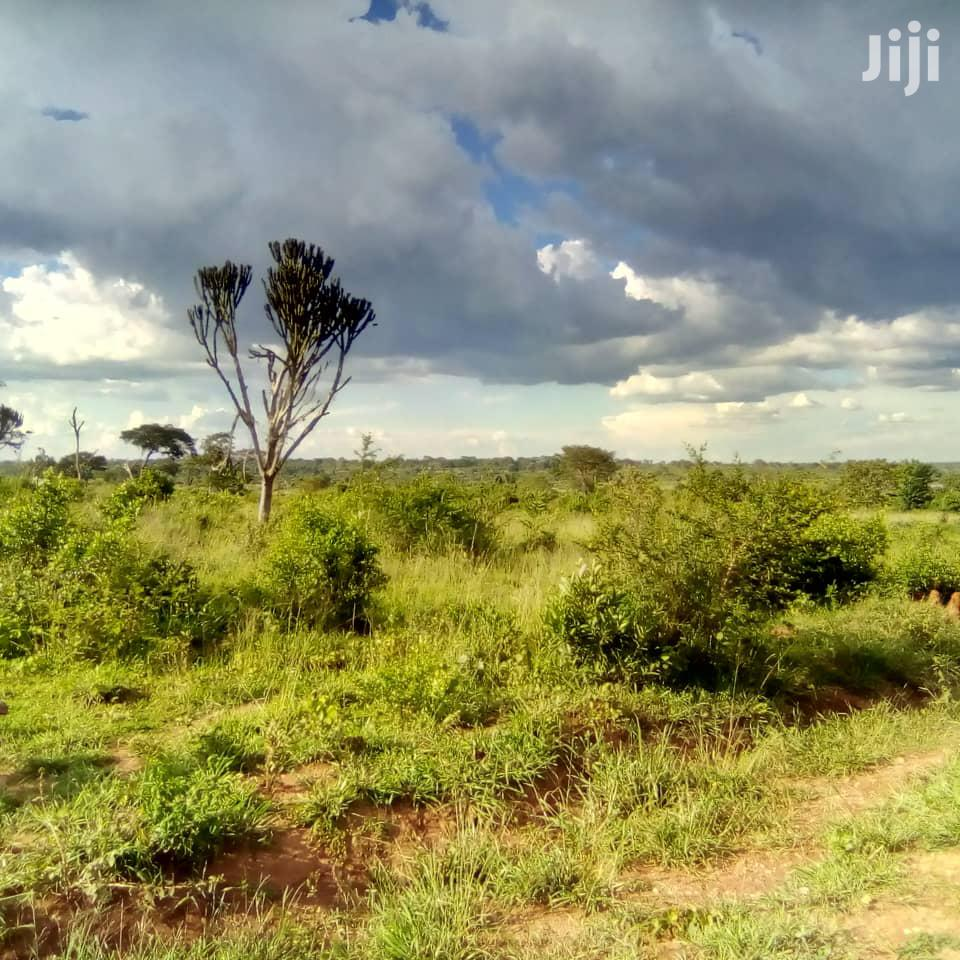 Archive: Land In Nakaseke For Sale