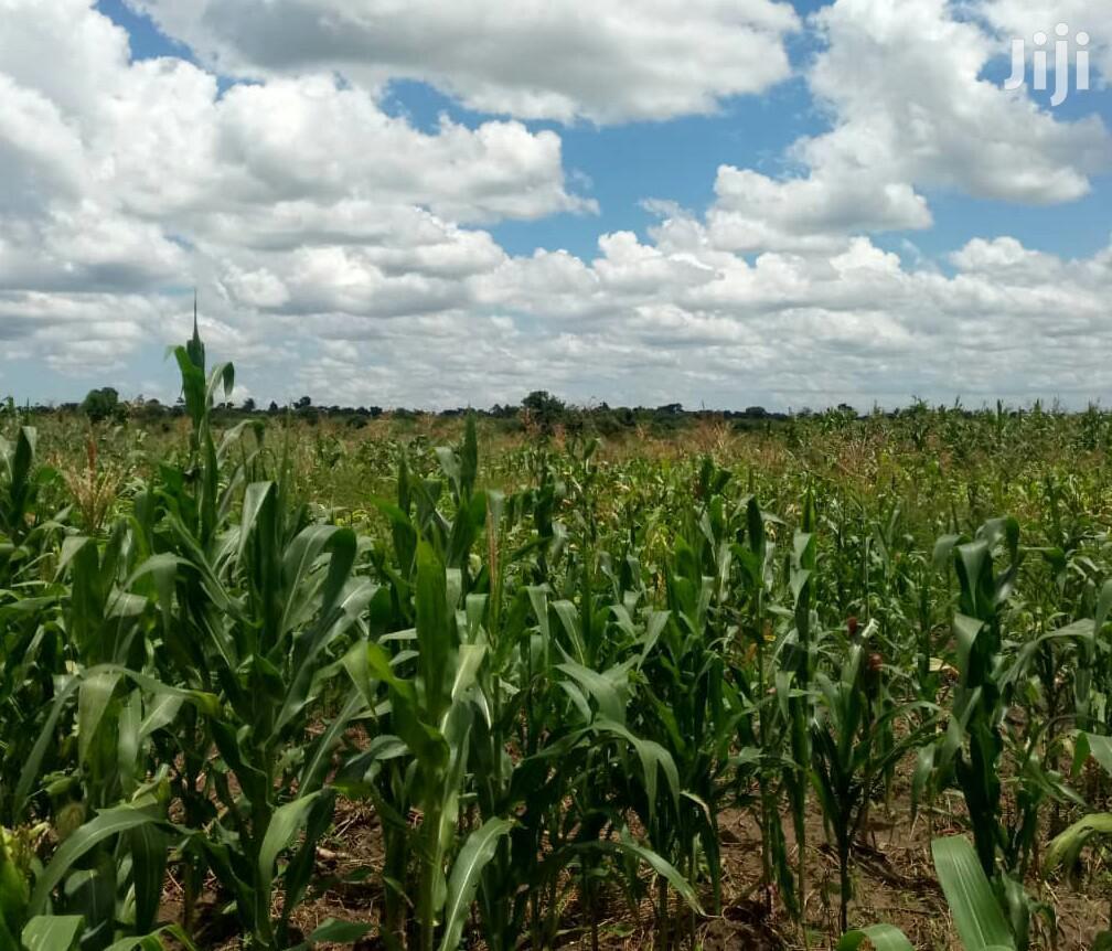 3 Acres Of Land In Gayaza Zirobwe For Sale   Land & Plots For Sale for sale in Kampala, Central Region, Uganda