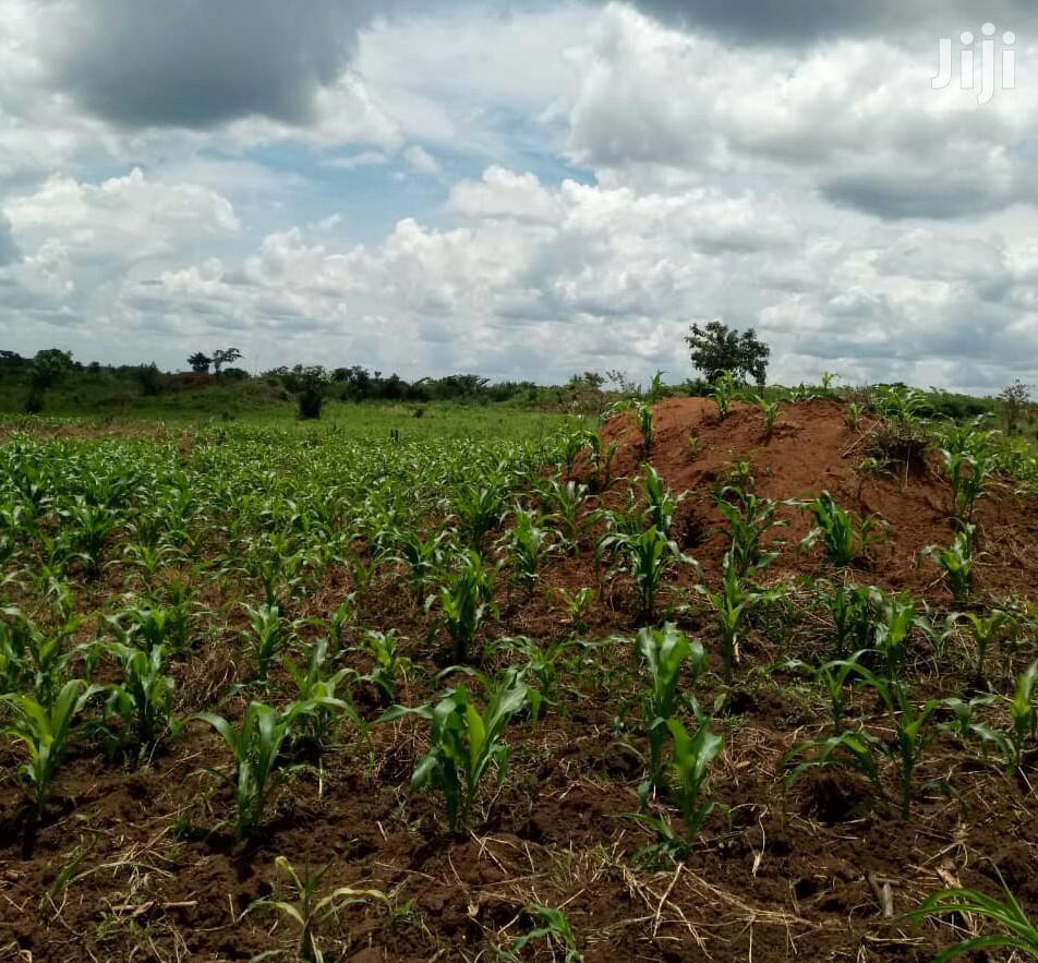 30 Acres of Farm Land in Gayaza Zirobwe for Sale | Land & Plots For Sale for sale in Kampala, Central Region, Uganda