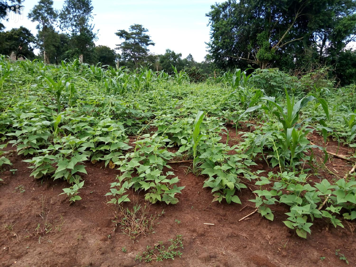 Plot for Sale in Kisaasi