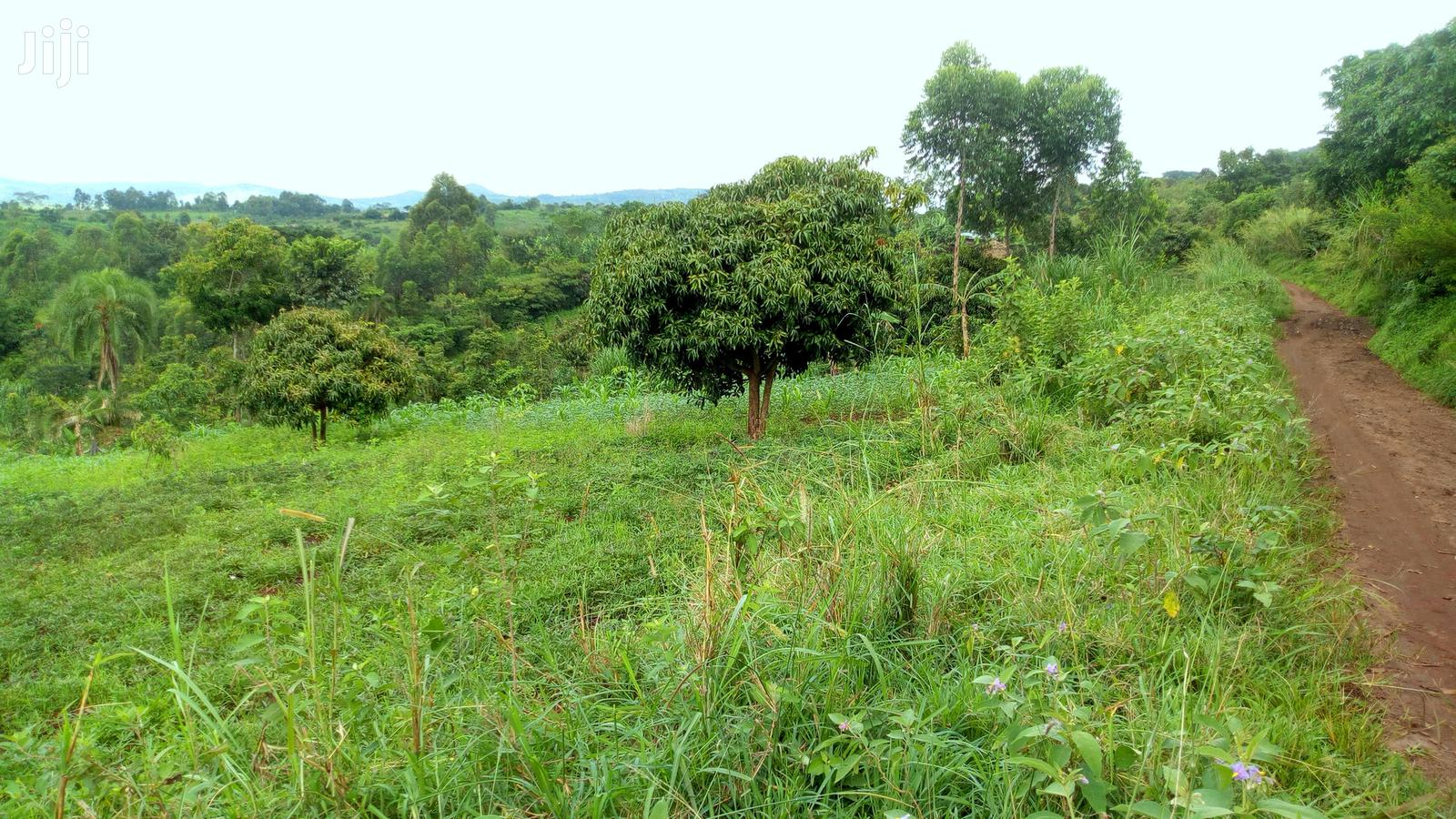 Archive: 30 Acres of Land for Sale in Butunduzi, Kyenjojo District.