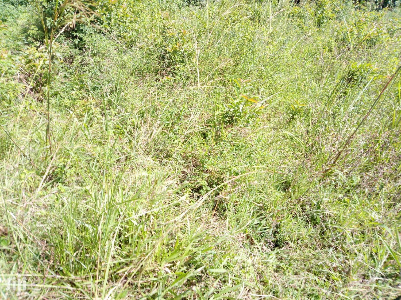 Archive: Land for Sale in Namugongo-Jogo