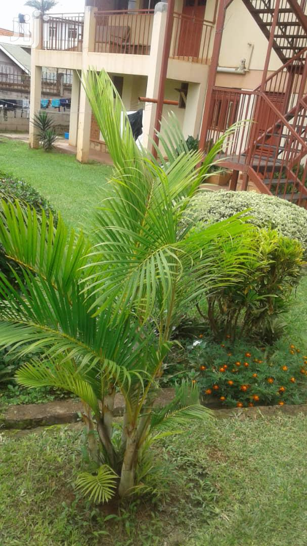 Archive: 2 Bdrms Furnished Apartment for Rent in Ntinda