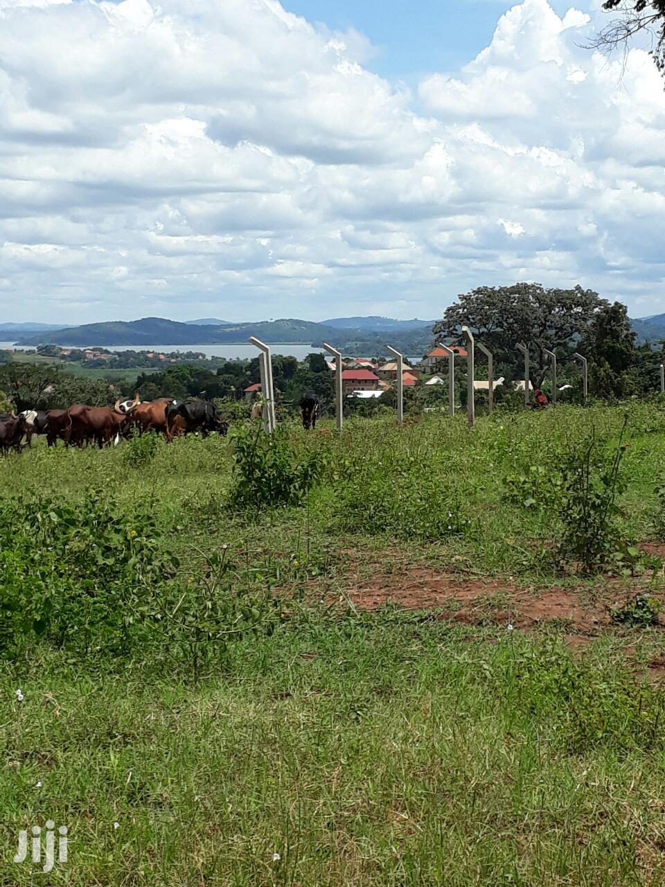 A New Estate at 4 Plots in Busabala Measuring 7 Decimals and Over