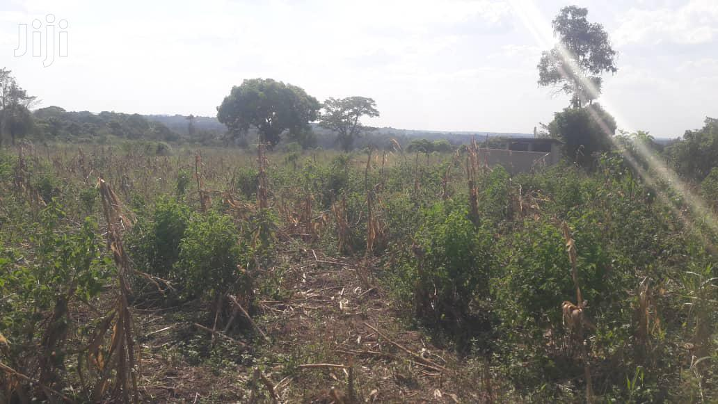 Archive: 17 Acres Of Farm Land In Busika