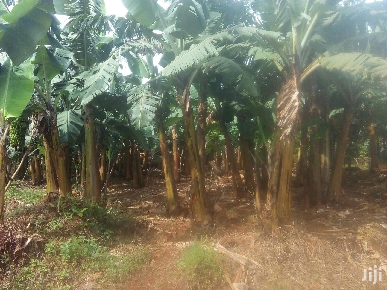4 Acres Land In Namulanda For Sale