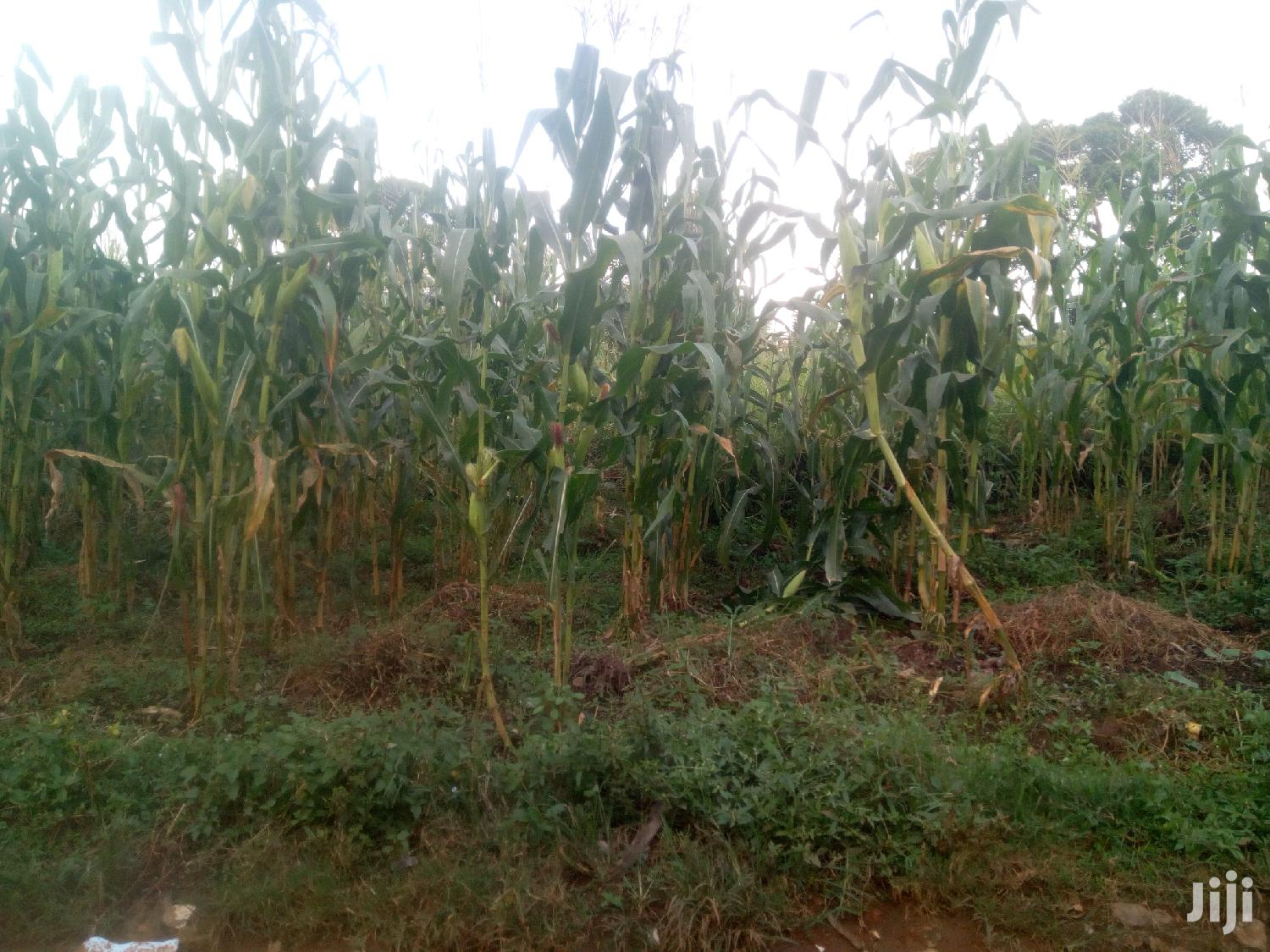 Cheap Plot for Sale Bukerere Mawangala | Land & Plots For Sale for sale in Kampala, Central Region, Uganda