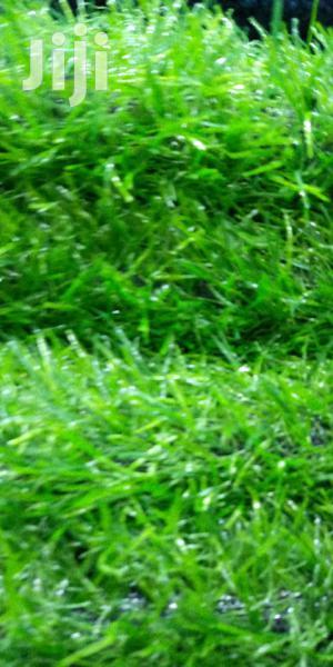 Modern Grass Carpet | Garden for sale in Central Region, Kampala