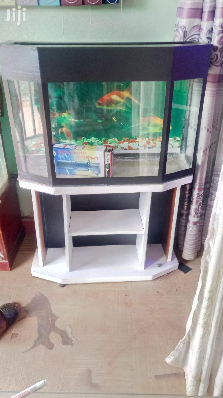 Corner Tank Aquarium