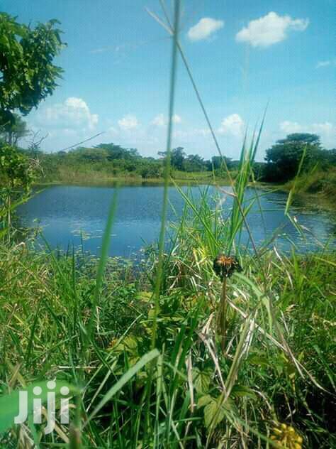 270 Acres Land In Zirobwe Kikyusa Town For Sale