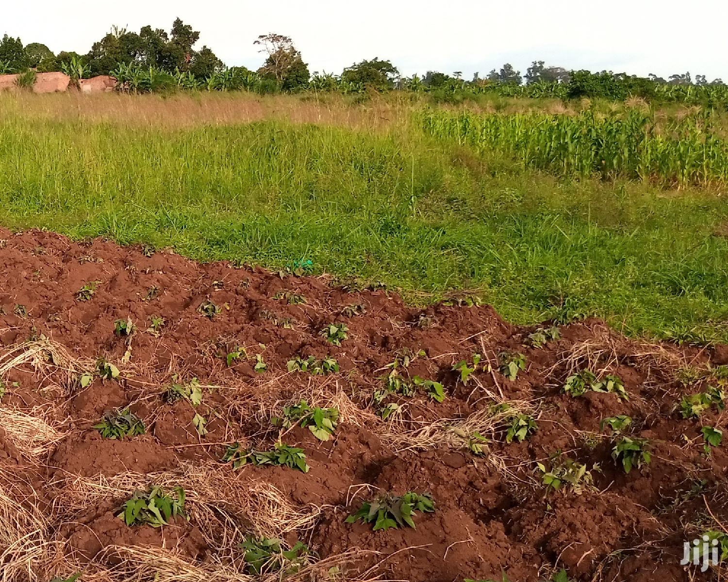 Land At Mityana Road Muduuma For Sale