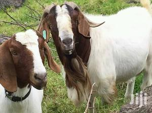 Good Quality Goats For Meat | Livestock & Poultry for sale in Central Region, Kampala