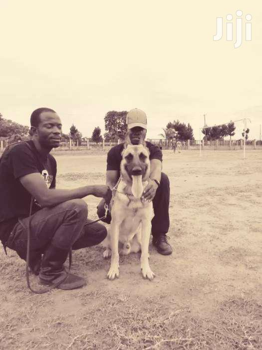 Dog Training And Other Services