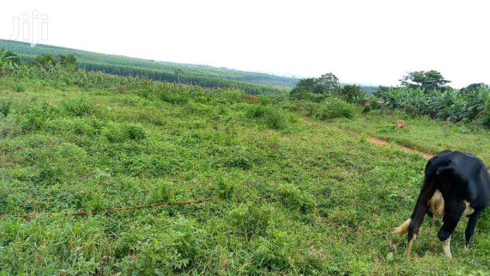 KISOWERA-PLOTS Neighbouring Cannan Sites | Land & Plots For Sale for sale in Mukono, Central Region, Uganda