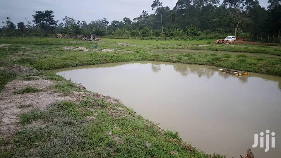 Home On Two Acres With 2 Big Fish Ponds With Big Fish On Sale Masurita | Houses & Apartments For Sale for sale in Kampala, Central Region, Uganda