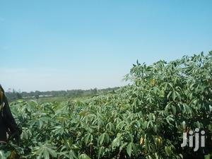 Land In Ntenjeru Mukono For Sale | Land & Plots For Sale for sale in Central Region, Kampala