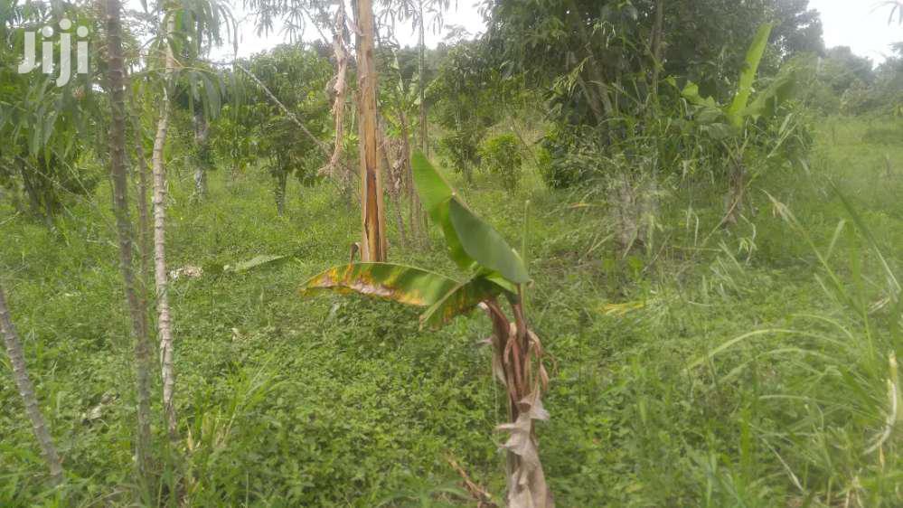Farmland In Kikyusa Luwero For Sale   Land & Plots For Sale for sale in Kampala, Central Region, Uganda