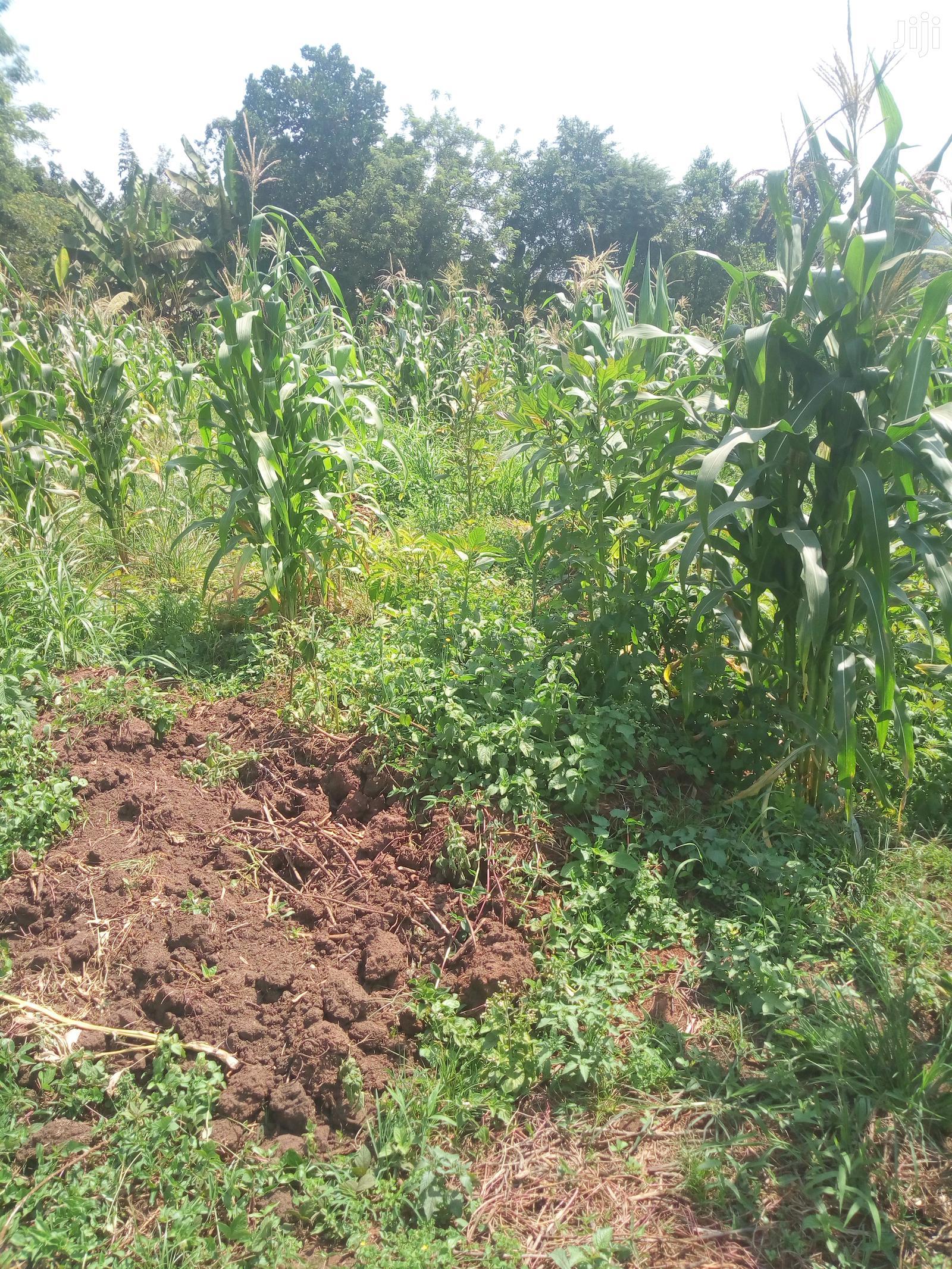 Plots, Gayaza Busiika Road, Kats and Deo Surveys LTD   Land & Plots For Sale for sale in Wakiso, Central Region, Uganda