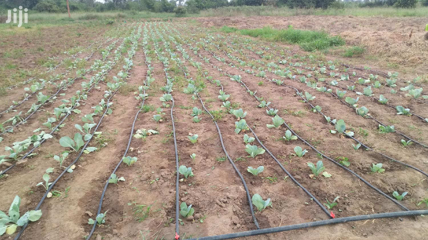 Drip Tape For Drip Irrigation Systems