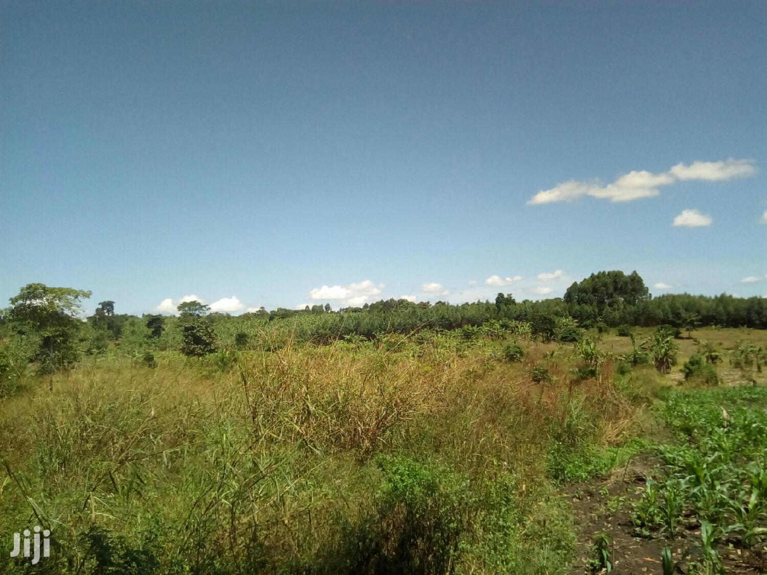 4 Acres Titled Private Mailo Land In Wakiso For Sale