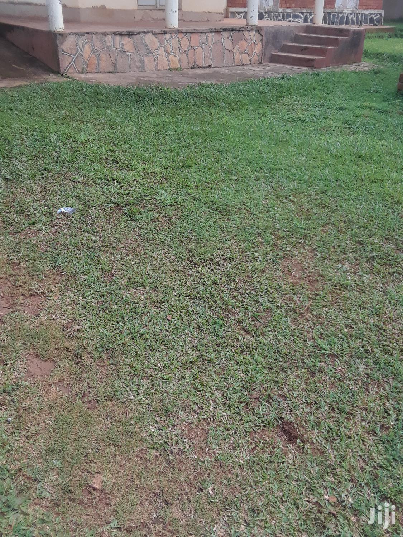 Plot for Sale in Mpigi Town, for Sale