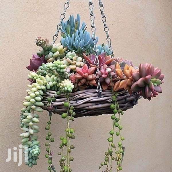 Flower Decors Flower Pots | Garden for sale in Kampala, Central Region, Uganda