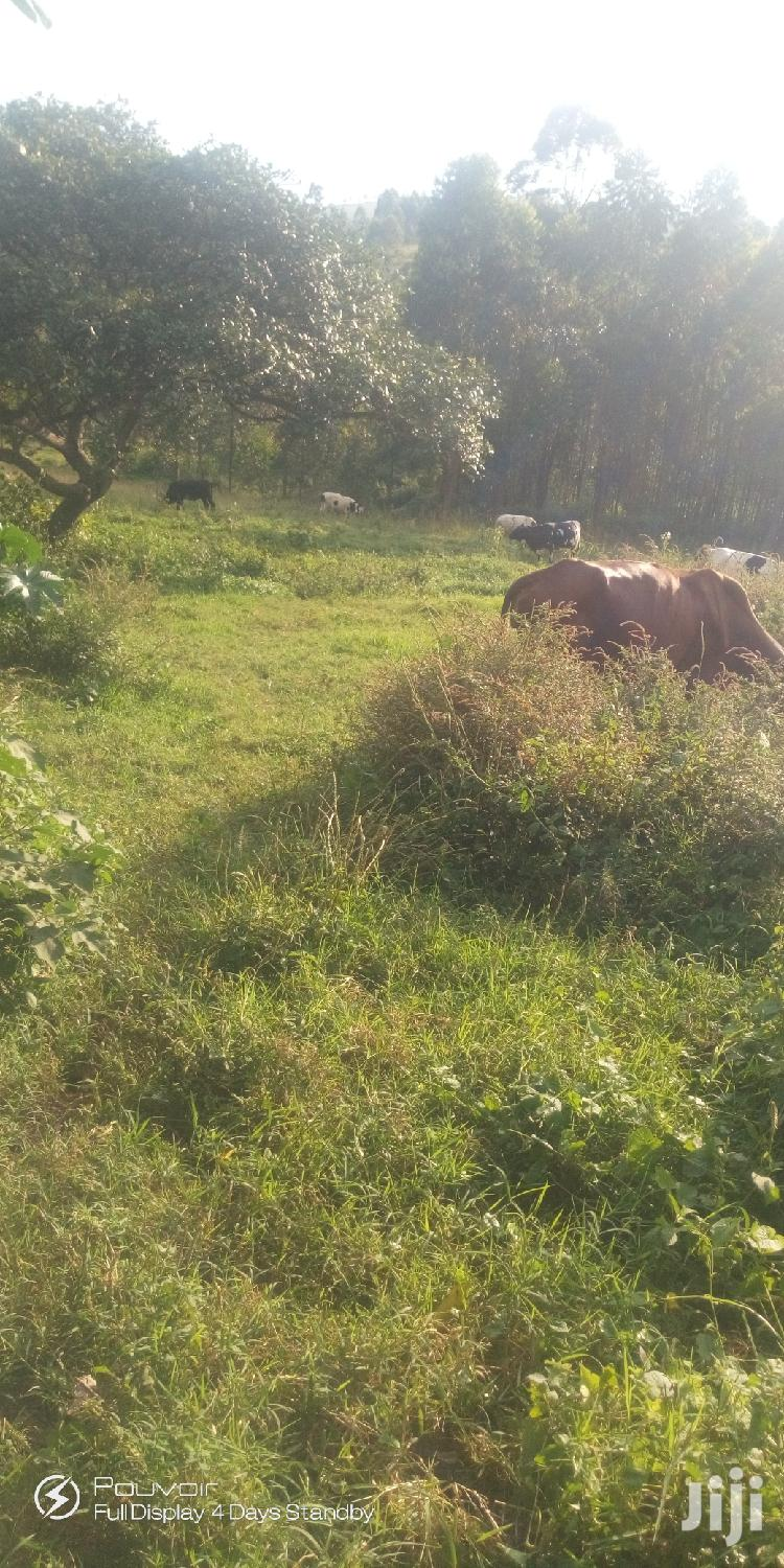 Cheap Plots in Mbarara City for Sale With the Title