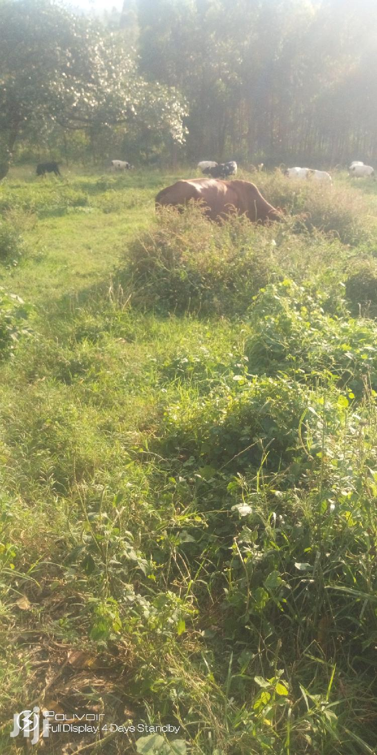 Cheap Plots in Mbarara City for Sale With the Title | Commercial Property For Sale for sale in Mbarara, Western Region, Uganda