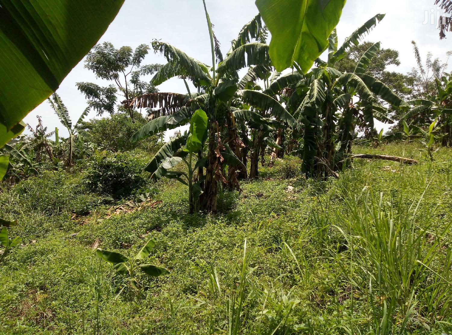 Archive: 10 Acres Land In Mukono Nakifuma For Sale