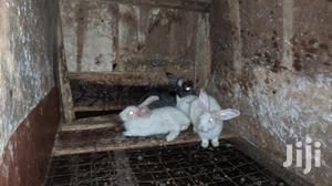Swiss Breed Rabbits And New Zealand Breed | Livestock & Poultry for sale in Central Region, Kampala