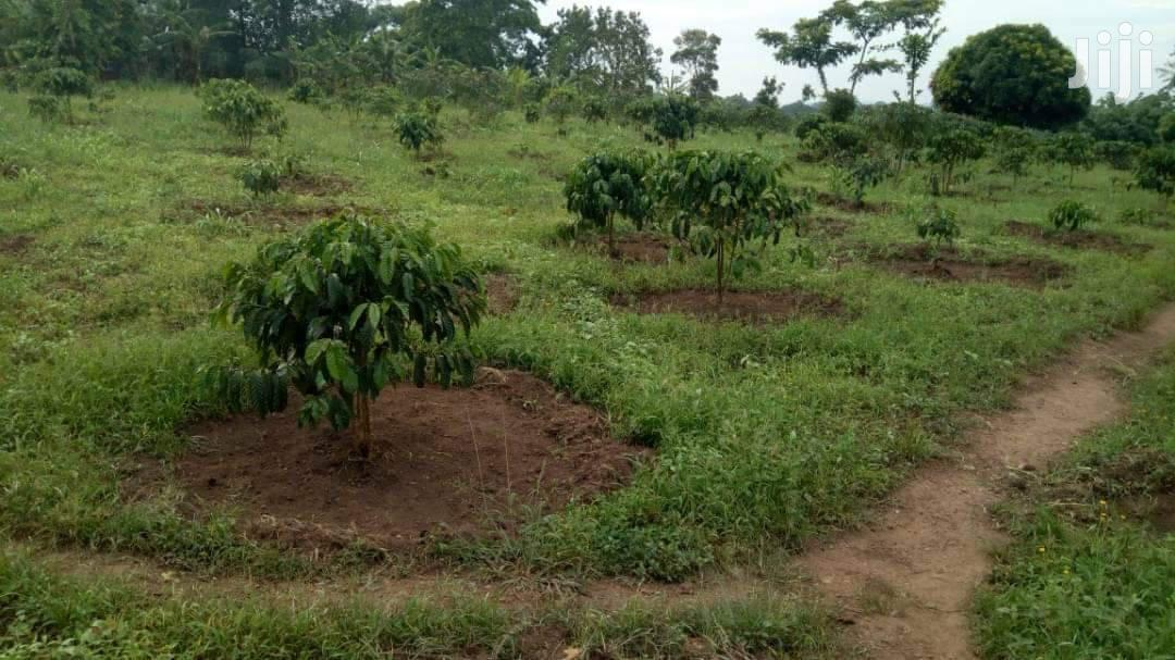 Archive: 100 Acres Land In Mityana For Sale