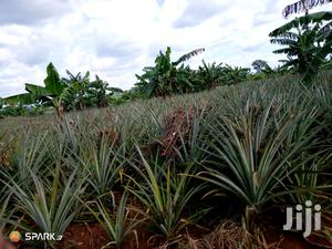 Agricultural Land In Luweero For Rent | Land & Plots for Rent for sale in Central Region, Luweero