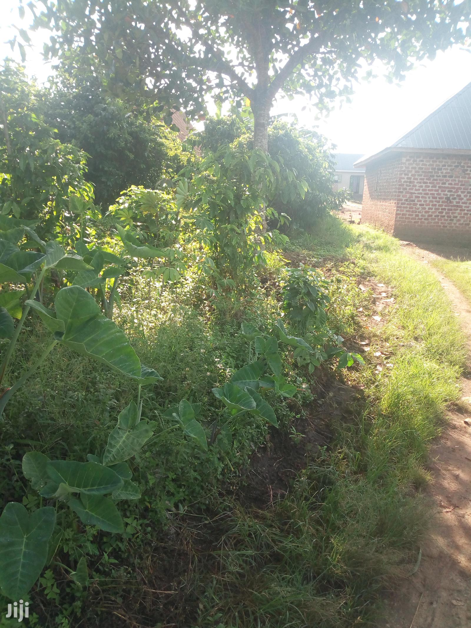 Plots at Busula Town Bombo Road FOR KATS DEO SUTVEYS LTD | Land & Plots For Sale for sale in Luweero, Central Region, Uganda
