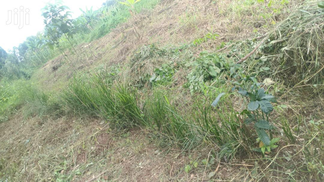 Archive: Land in Mubende