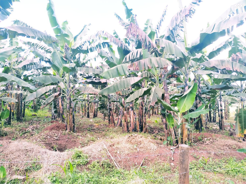 Plot In Namugongo Sonde For Sale | Land & Plots For Sale for sale in Kampala, Central Region, Uganda
