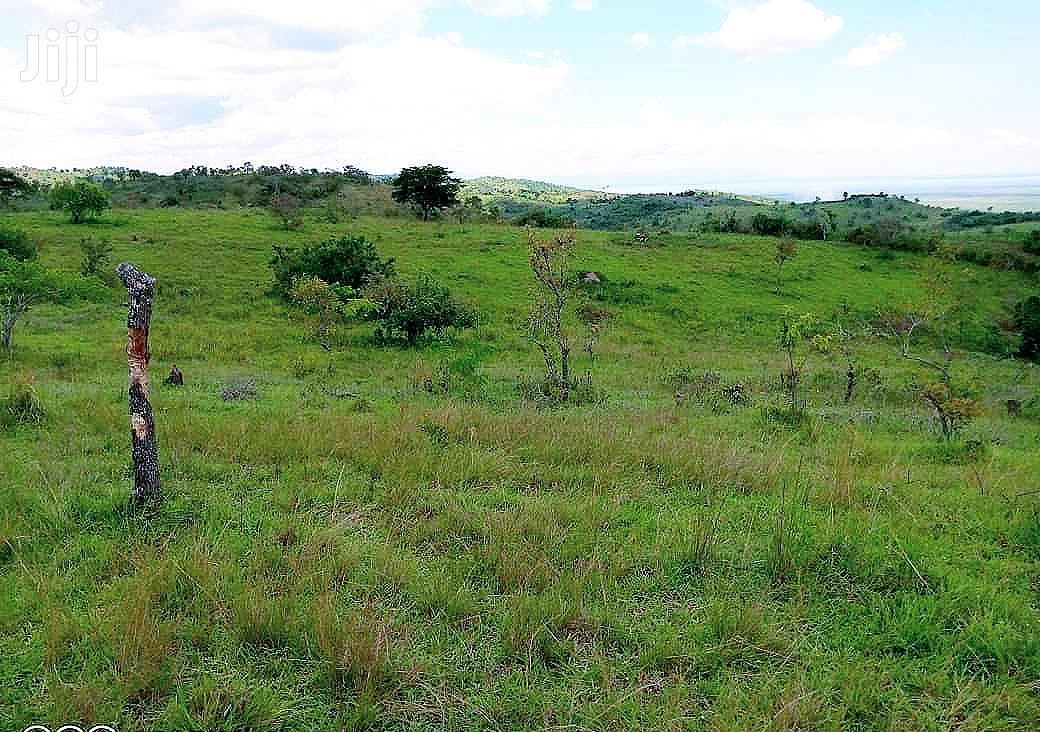 225 Acres Of Titled Land For Sale In Kamwenge District