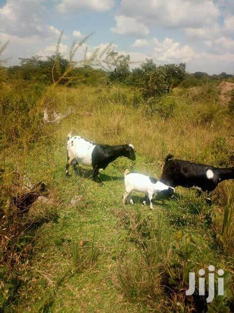 Land In Zirobwe Kikyusa Town For Sale
