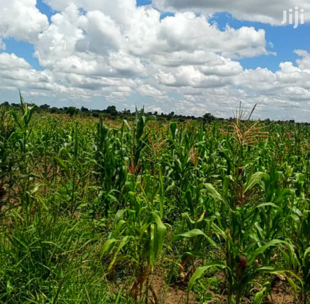 30 Acres Of Land In Zirobwe Town For Sale