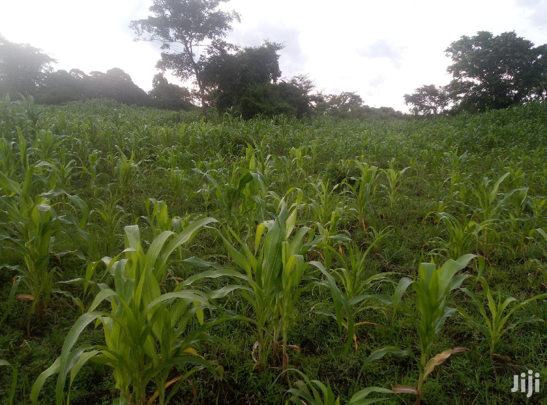 Beautiful Land In Zirobwe Kikyusa For Sale