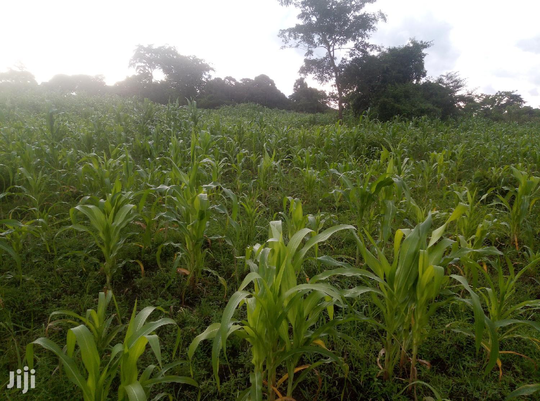 Beautiful Land In Zirobwe Kikyusa For Sale   Land & Plots For Sale for sale in Kampala, Central Region, Uganda