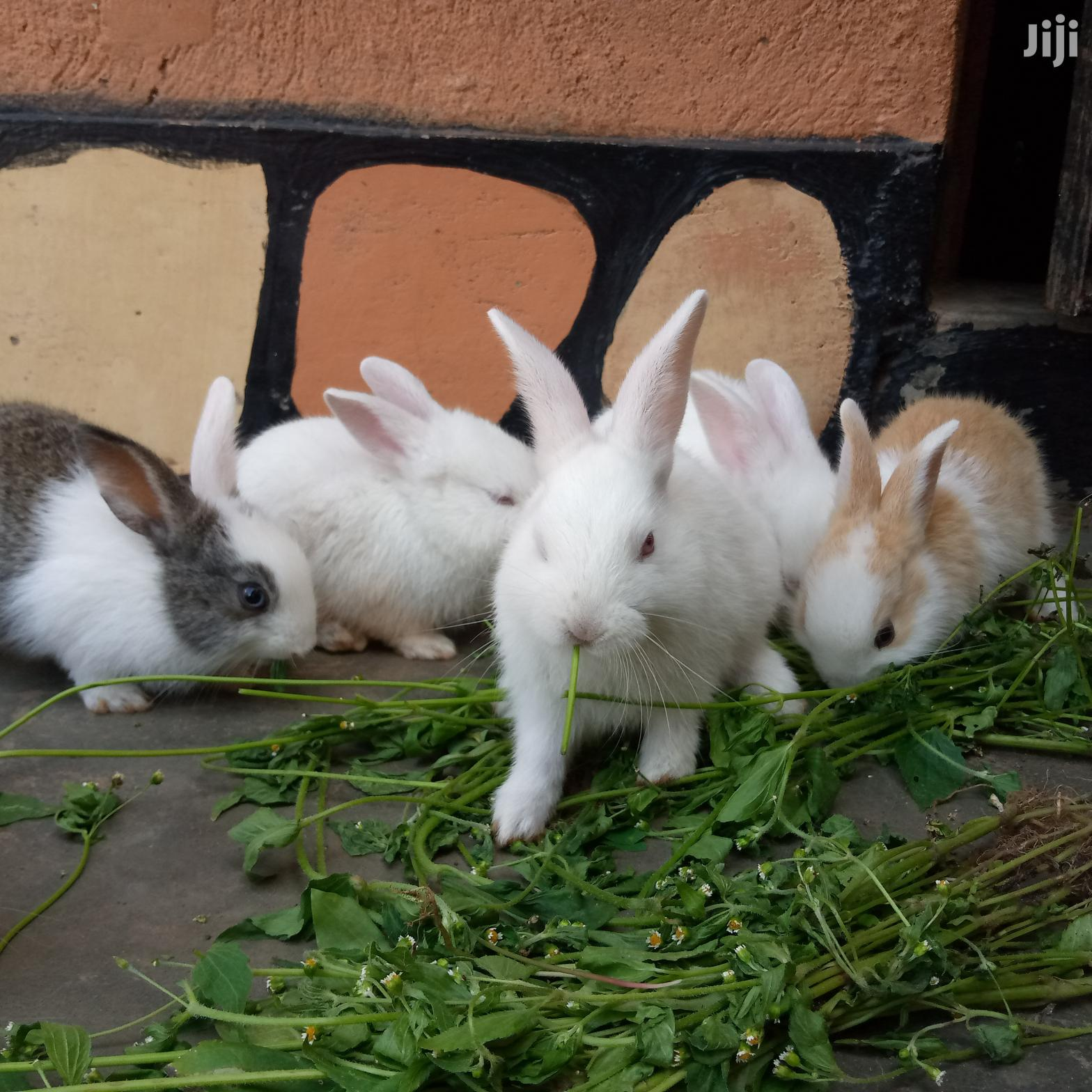 Archive: Rabbits Available