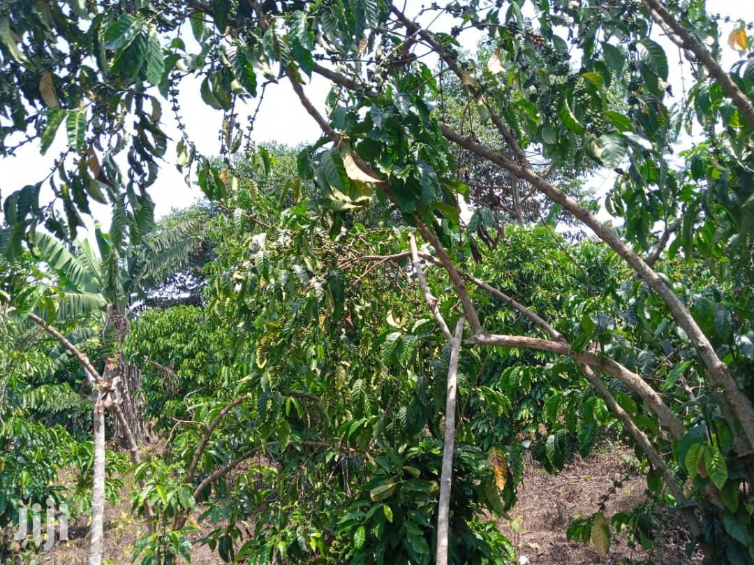 Land In Wobulenzi For Sale | Land & Plots For Sale for sale in Kampala, Central Region, Uganda