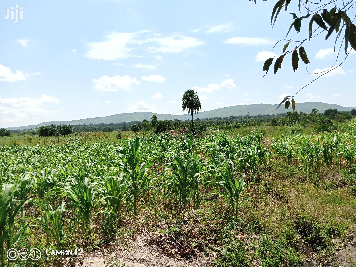 30 Acres of Land for Sale in Nkokonjeru Jinja Road | Land & Plots For Sale for sale in Wakiso, Central Region, Uganda