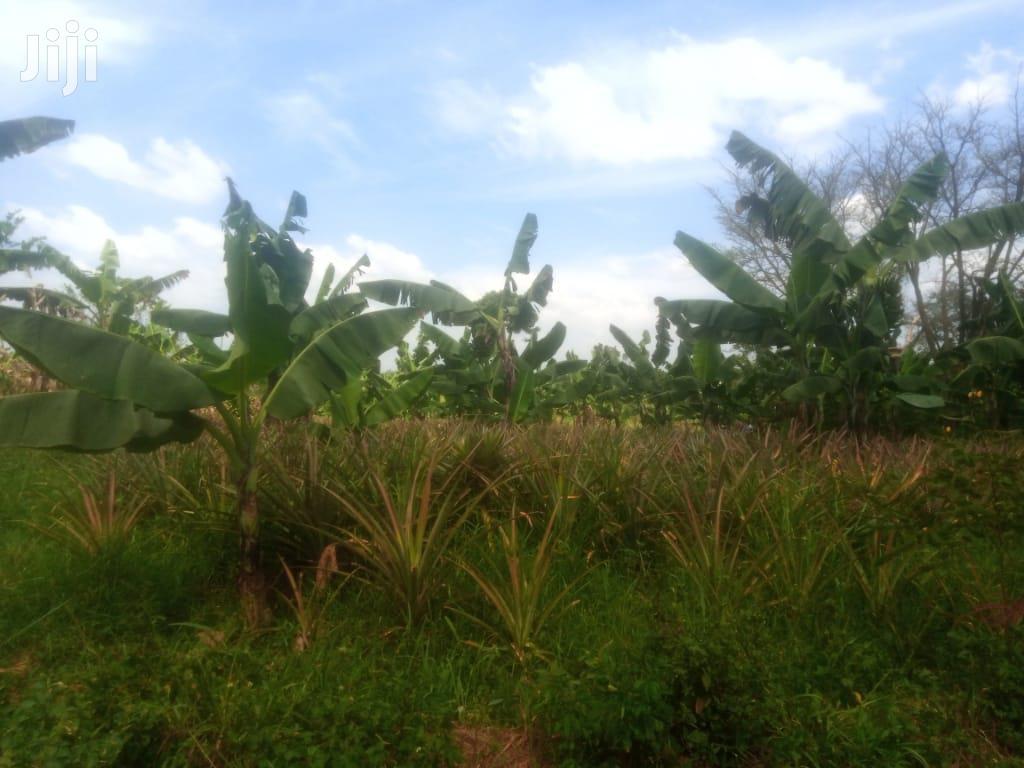 Farmland At Nazigo Kayunga For Sale   Land & Plots For Sale for sale in Kayunga, Central Region, Uganda