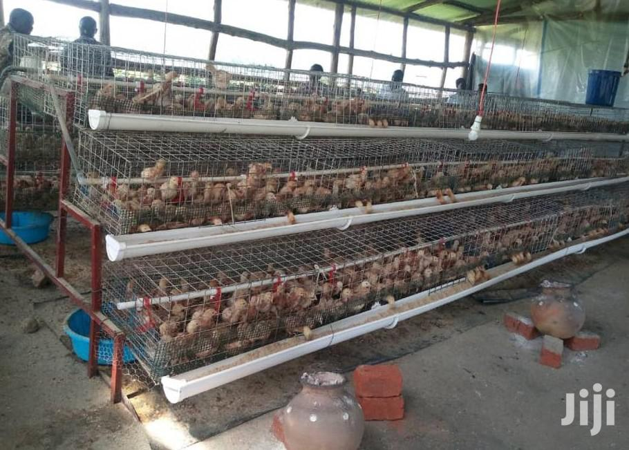 320 Chicks Cages | Livestock & Poultry for sale in Kampala, Central Region, Uganda