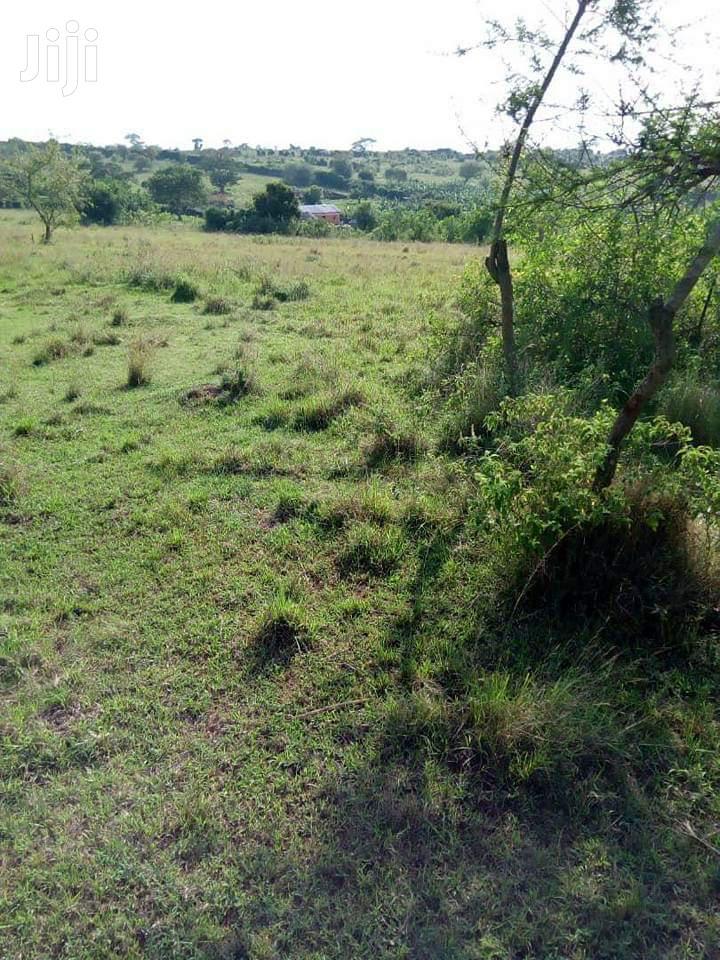 15 Acres Land In Kikyusa Zirobwe For Sale