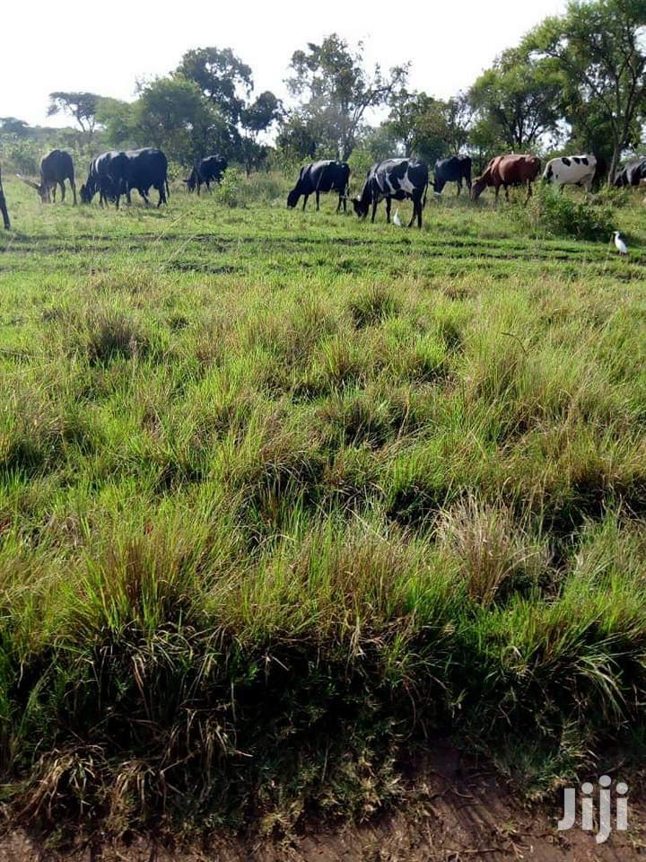 15 Acres Land In Kikyusa Zirobwe For Sale   Land & Plots For Sale for sale in Kampala, Central Region, Uganda