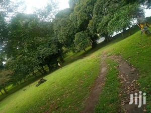 8 Acres Of BEACH LAND ON SALE; Located In Kalangala I.