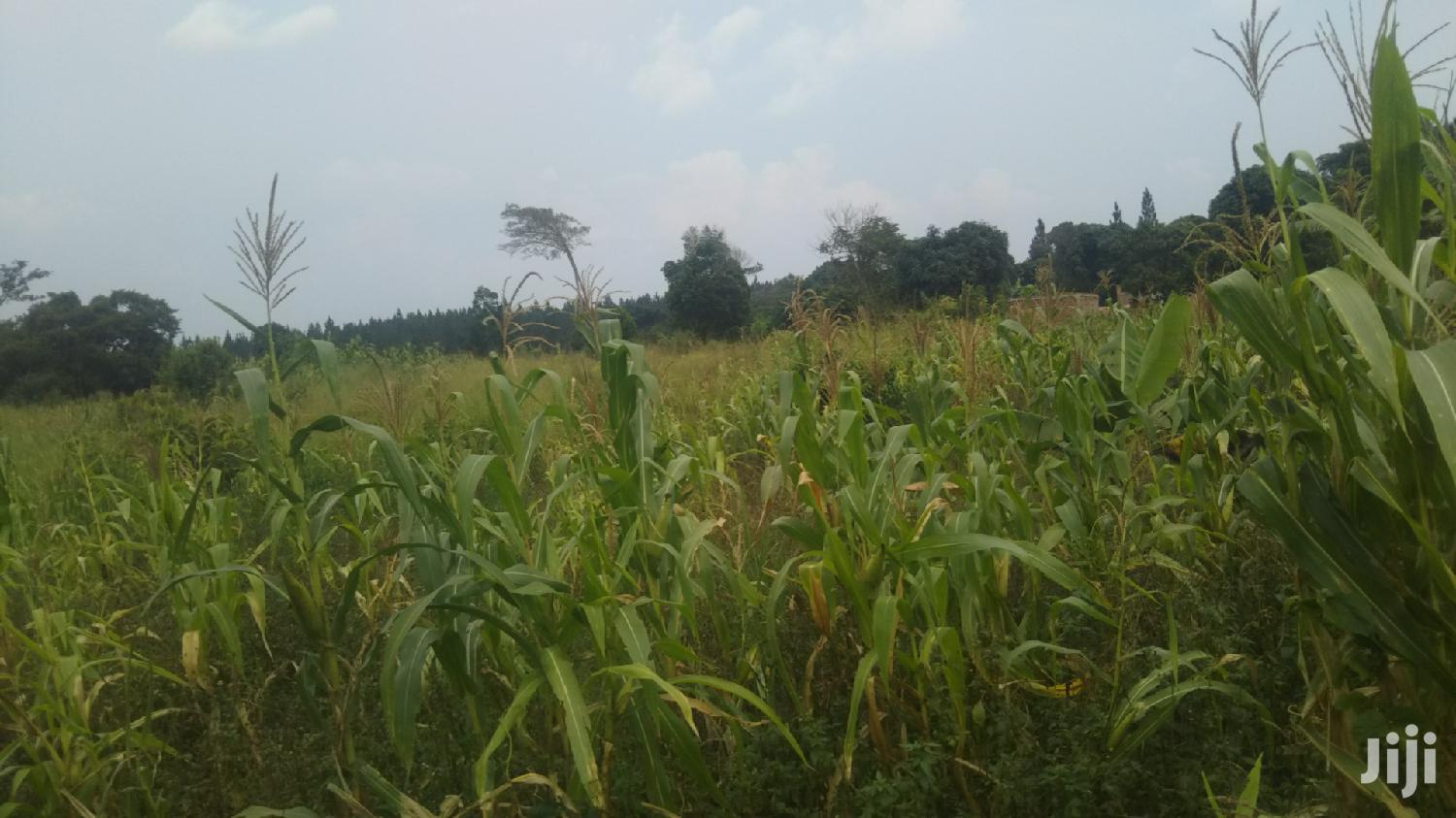 10 Acres of Farmland in Kasana Luwero